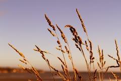 Hierba del mar foto de archivo libre de regalías