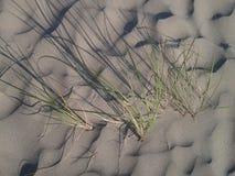 Hierba del mar Fotografía de archivo