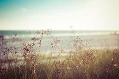 Hierba del mar Foto de archivo