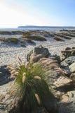 Hierba del mar, dunas de arena y Point Loma foto de archivo