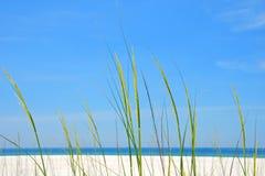 Hierba del mar en la orilla Fotos de archivo libres de regalías