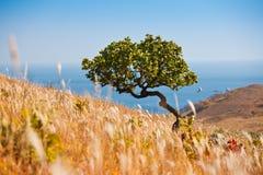 Hierba del otoño Fotos de archivo libres de regalías