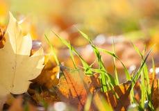 Hierba del otoño Imágenes de archivo libres de regalías