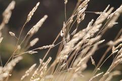 Hierba del otoño foto de archivo libre de regalías