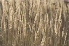 Hierba del otoño Fotografía de archivo libre de regalías
