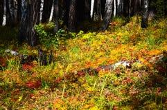 Hierba del otoño del color del bosque Fotografía de archivo