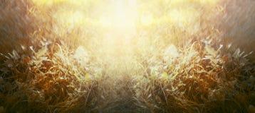 Hierba del otoño con la luz del sol, fondo natural, bandera para el sitio web Imagen de archivo
