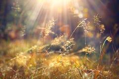 Hierba del otoño con rocío de la mañana en primer de la luz del sol Foto de archivo