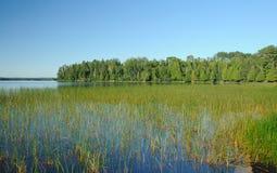 Hierba del pantano en el lago Basswood imagen de archivo