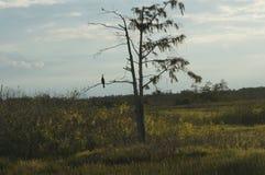Hierba del pantano y el pantano Fotografía de archivo