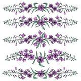 Hierba del sauce, angustifolium de Chamerion, laurel de San Antonio, ejemplo botánico dibujado mano del bosquejo del color del ad Imagen de archivo libre de regalías