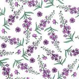 Hierba del sauce, angustifolium de Chamerion, laurel de San Antonio, ejemplo botánico dibujado mano del bosquejo del color del ad Fotografía de archivo libre de regalías