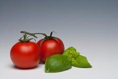 Hierba del tomate y de la albahaca foto de archivo libre de regalías
