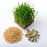 Hierba del trigo, pan del trigo integral y granos del trigo Foto de archivo
