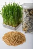 Hierba del trigo, pan del trigo integral y granos del trigo Imagen de archivo libre de regalías
