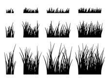 Hierba del vector en un fondo blanco Foto de archivo
