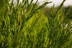 Hierba del verano del color verde de las hojas Foto de archivo libre de regalías