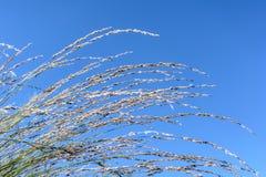 Hierba del verano de California debajo del cielo azul Fotos de archivo