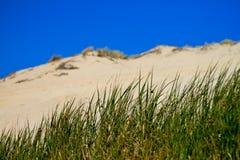 Hierba delante de la duna Imagen de archivo