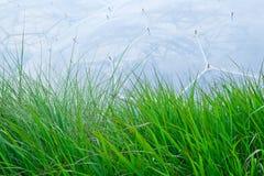 Hierba delante del proyecto de Eden Foto de archivo