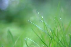 Hierba después de la lluvia Imagen de archivo libre de regalías