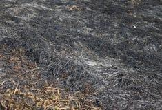 Hierba después del fuego Fotografía de archivo libre de regalías