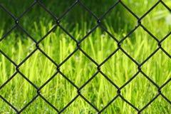 Hierba detrás de una cerca Fotografía de archivo
