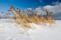 Hierba doblada en la playa Foto de archivo libre de regalías