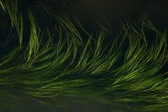 Hierba en agua Foto de archivo libre de regalías