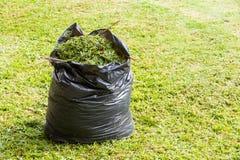 Hierba en bolso de basura Fotos de archivo