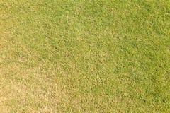Hierba en campo de golf del verde que pone Foto de archivo