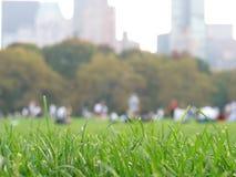 Hierba en Central Park Foto de archivo libre de regalías