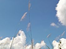 Hierba en día del cielo nublado foto de archivo libre de regalías