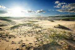 Hierba en desierto imagenes de archivo