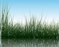 Hierba en el agua Imágenes de archivo libres de regalías