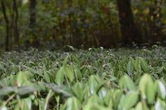 Hierba en el bosque Fotos de archivo libres de regalías