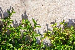 Hierba en el cemento Foto de archivo libre de regalías
