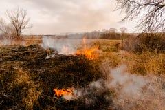 Hierba en el fuego Fotografía de archivo