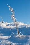 Hierba en el invierno Foto de archivo