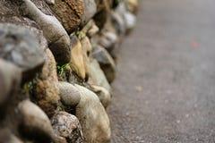 Hierba en el medio de una pared de piedra Fotos de archivo libres de regalías