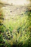 Hierba en el parque nacional de Pha Taem Foto de archivo