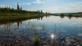 Hierba en el río Imágenes de archivo libres de regalías
