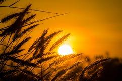 Hierba en el sol Foto de archivo libre de regalías