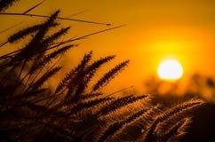 Hierba en el sol Imagen de archivo libre de regalías