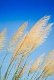 Hierba en el viento. Fotos de archivo