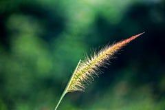Hierba en el viento Foto de archivo libre de regalías