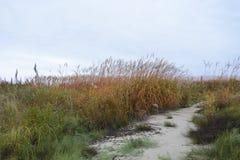 Hierba en el viento del otoño fotografía de archivo libre de regalías