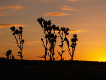 Hierba en fondo de la puesta del sol Fotos de archivo libres de regalías