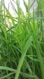Hierba en granja imagenes de archivo