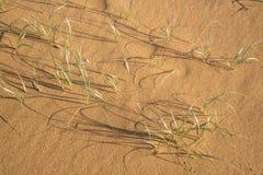 Hierba en la arena Imagen de archivo
